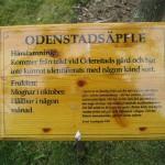 Odensta äpple